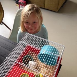 De hamster (1)
